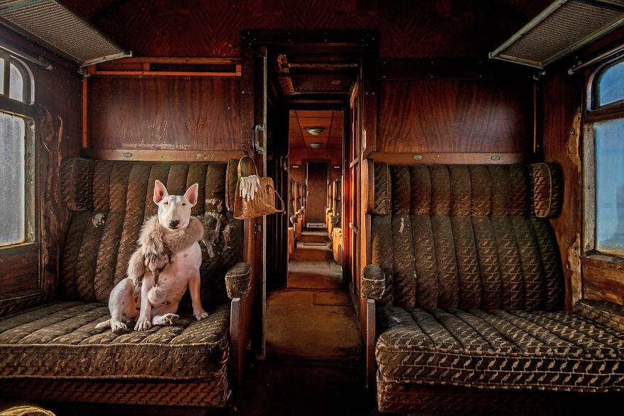 cachorros-e-dono-exploram-lugares-abandonados-da-europa-2