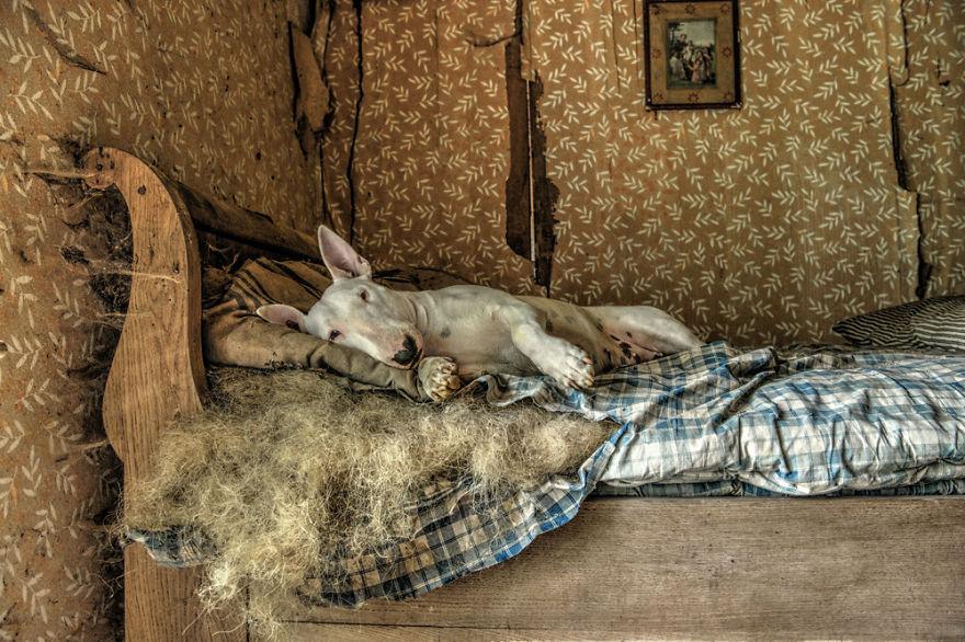 cachorros-e-dono-exploram-lugares-abandonados-da-europa-20