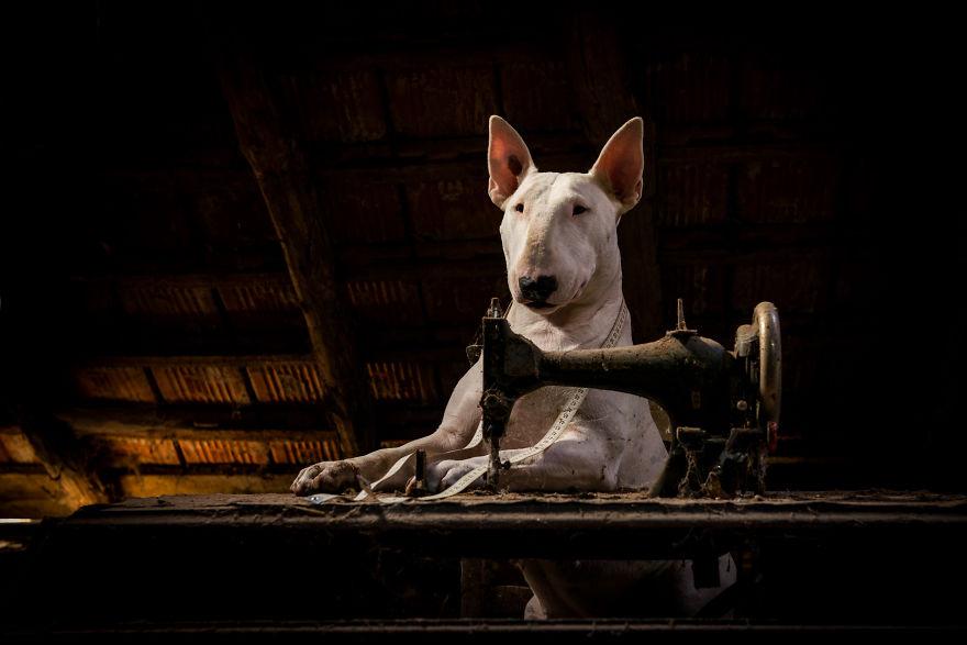 cachorros-e-dono-exploram-lugares-abandonados-da-europa-3