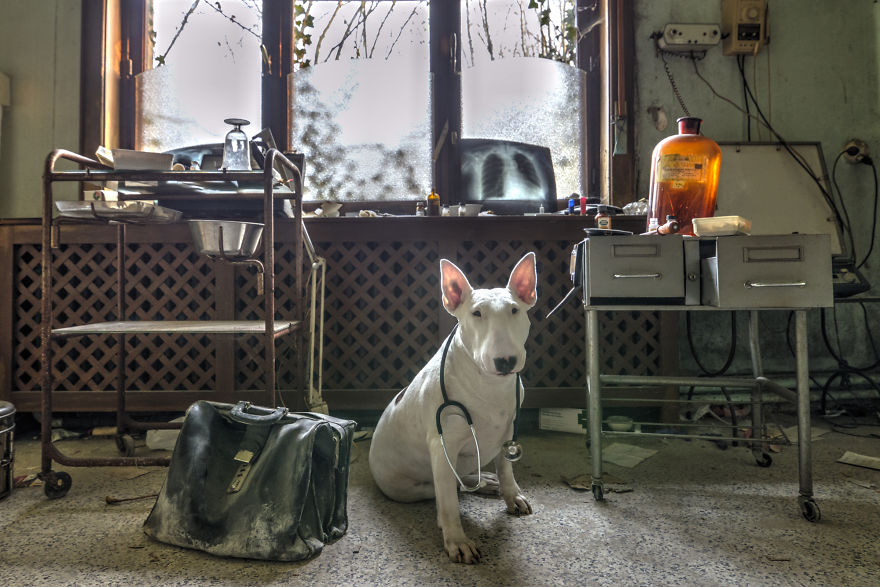 cachorros-e-dono-exploram-lugares-abandonados-da-europa-4
