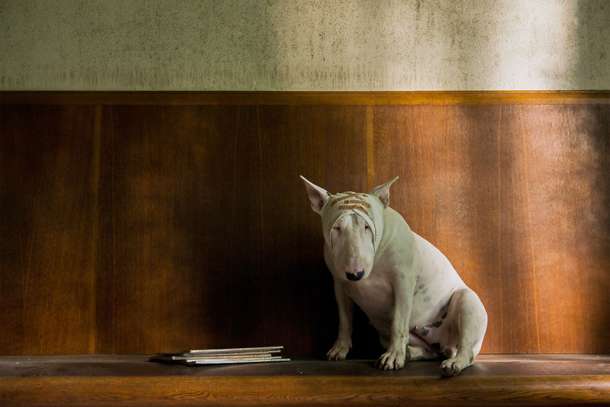 cachorros-e-dono-exploram-lugares-abandonados-da-europa-7