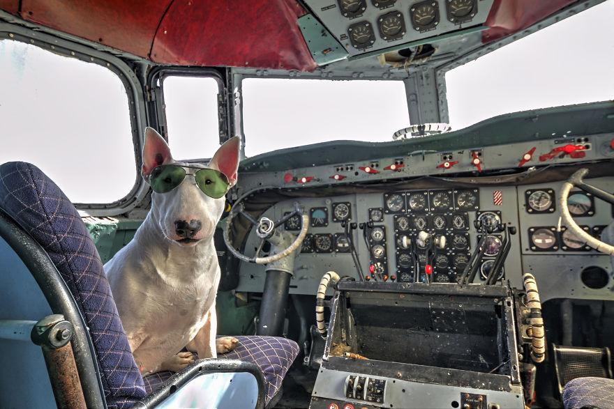 cachorros-e-dono-exploram-lugares-abandonados-da-europa-8
