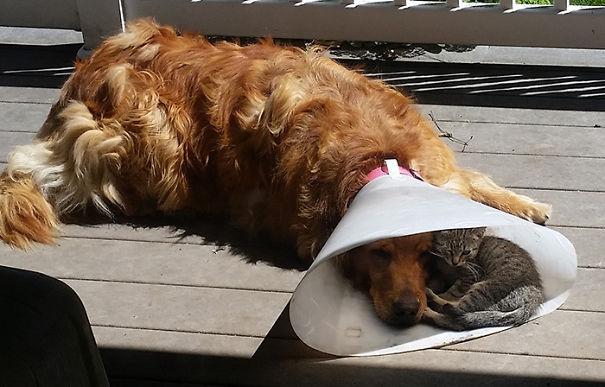 cachorros-e-gatos-podem-ser-melhores-amigos-1