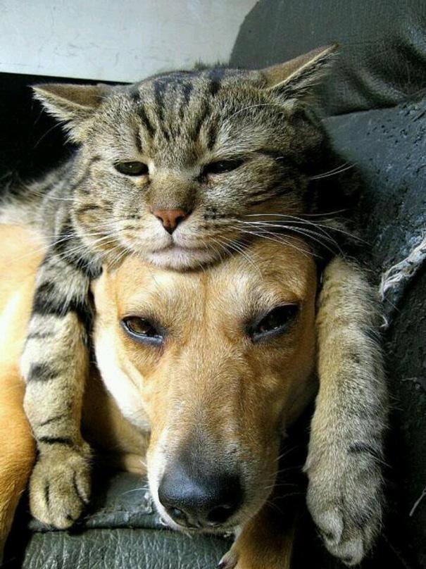 cachorros-e-gatos-podem-ser-melhores-amigos-11