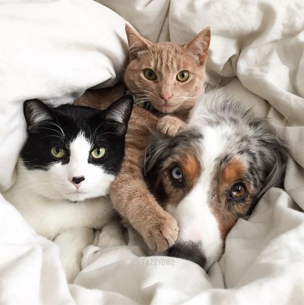 cachorros-e-gatos-podem-ser-melhores-amigos-12