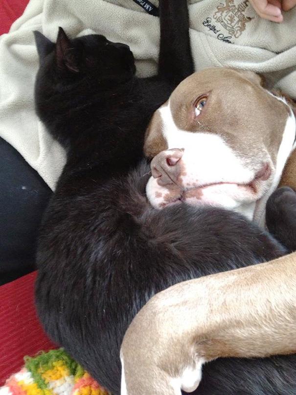 cachorros-e-gatos-podem-ser-melhores-amigos-13