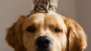 cachorros-e-gatos-podem-ser-melhores-amigos-16