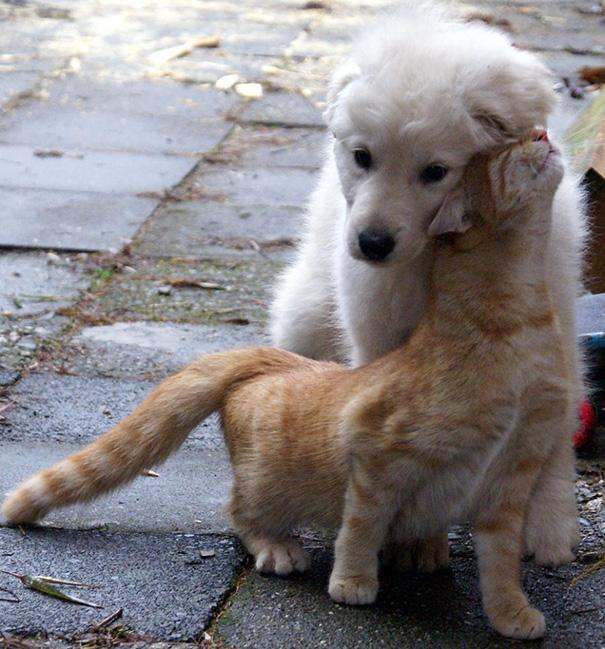 cachorros-e-gatos-podem-ser-melhores-amigos-20