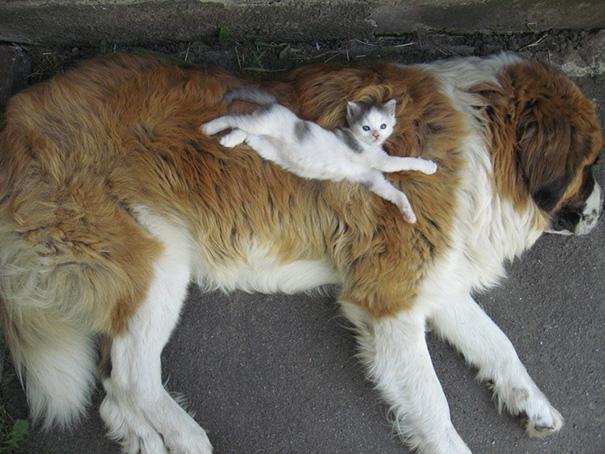 cachorros-e-gatos-podem-ser-melhores-amigos-7