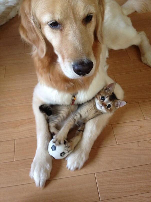 cachorros-e-gatos-podem-ser-melhores-amigos-8