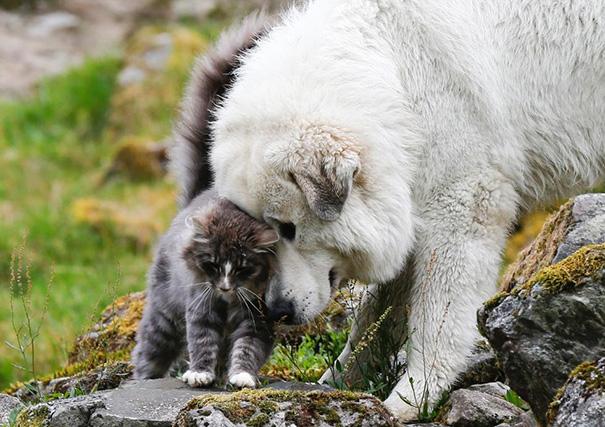 cachorros-e-gatos-podem-ser-melhores-amigos-9