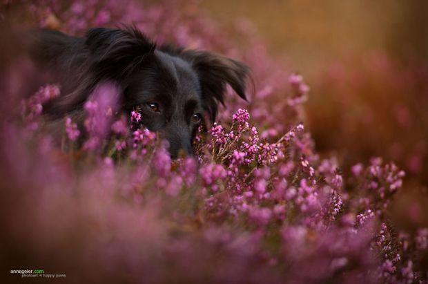 cachorros-e-natureza-1