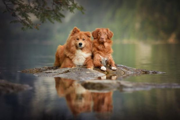 cachorros-e-natureza-10