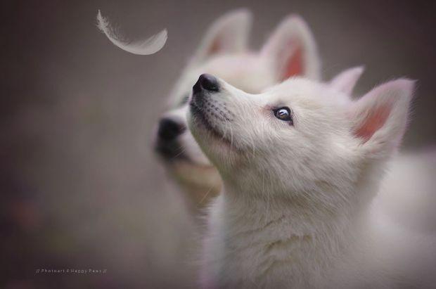 cachorros-e-natureza-13