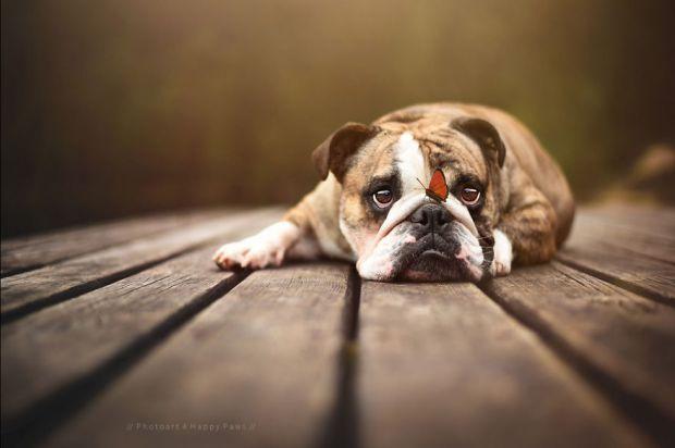 cachorros-e-natureza-14