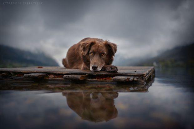 cachorros-e-natureza-15