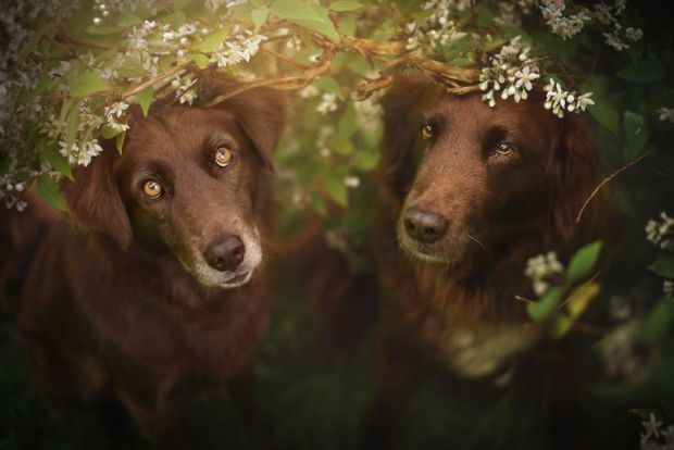 cachorros-e-natureza-17