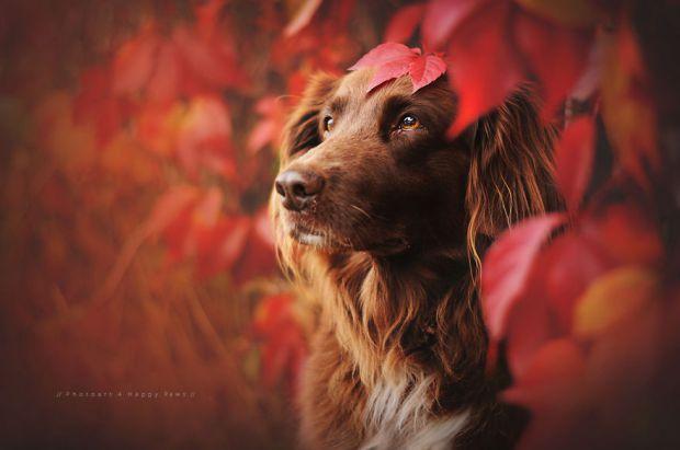 cachorros-e-natureza-2