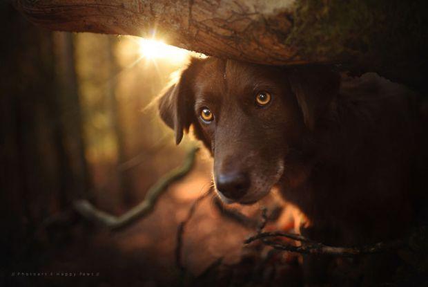 cachorros-e-natureza-21