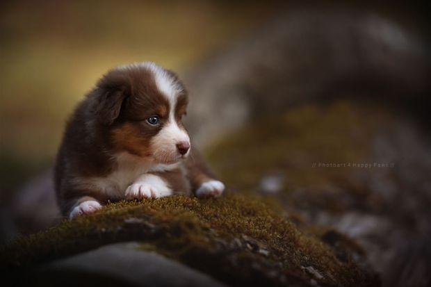 cachorros-e-natureza-23