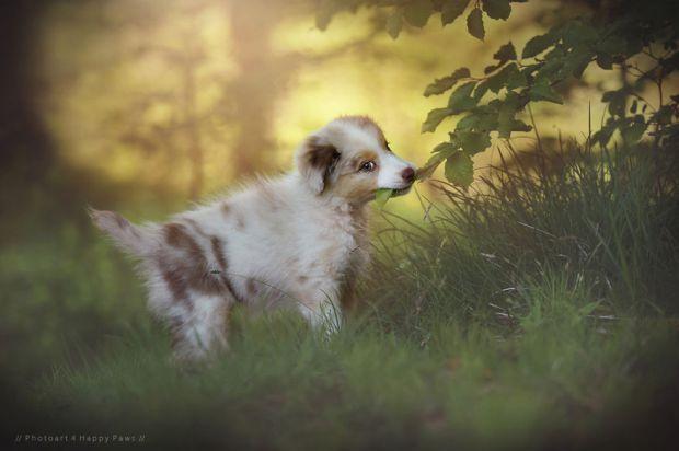 cachorros-e-natureza-25