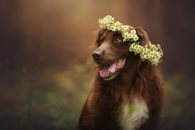 cachorros-e-natureza-26