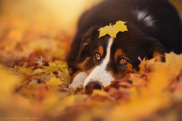 cachorros-e-natureza-3