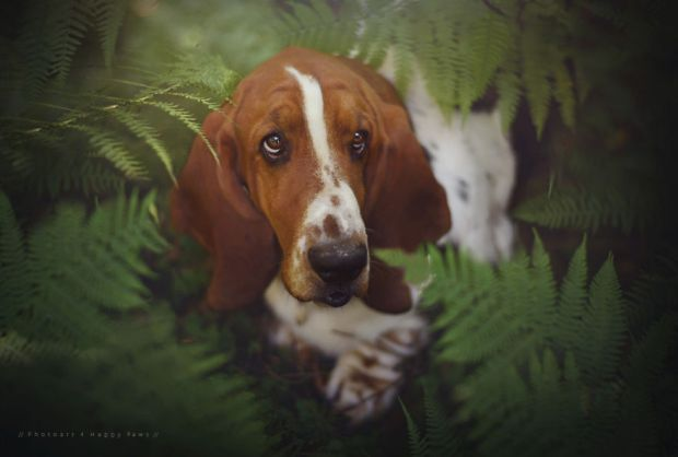 cachorros-e-natureza-5