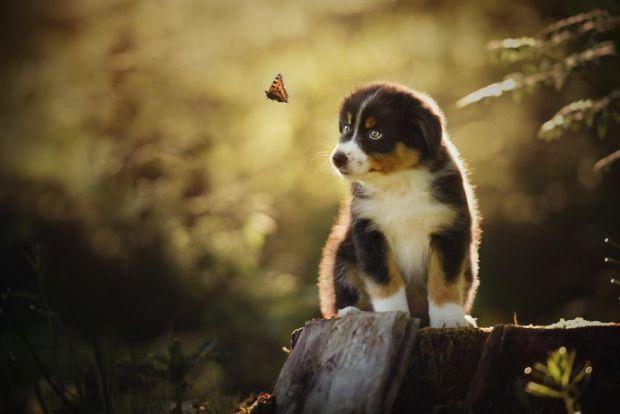 cachorros-e-natureza-6