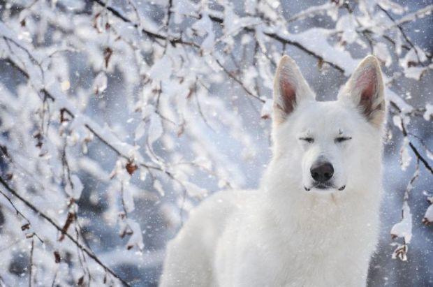 cachorros-e-natureza-7