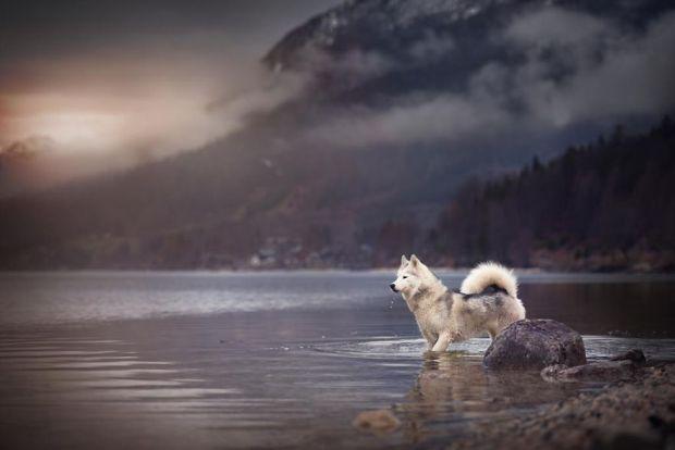 cachorros-e-natureza-8