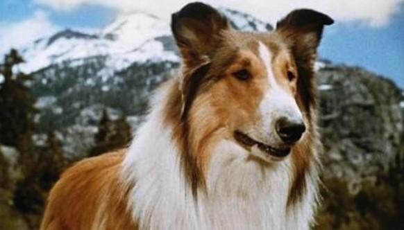 cachorros-famosos-dos-filmes-5
