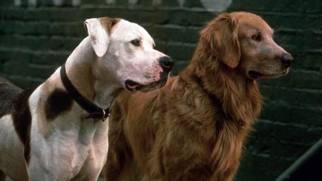 cachorros-famosos-dos-filmes-7