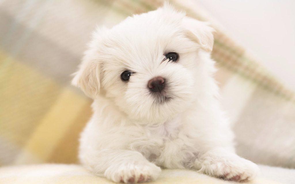 cachorros-muito-pequenos-30