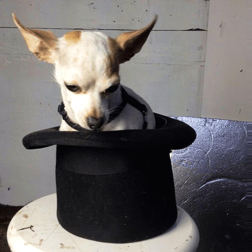 cachorros-pequenos-1