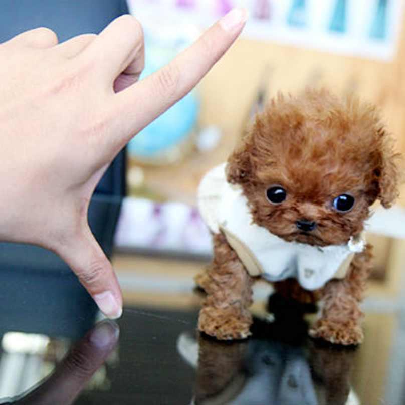 cachorros-pequenos-11