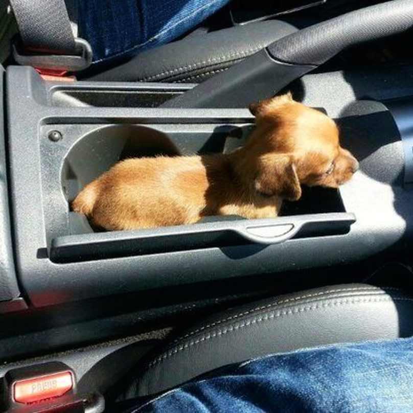 cachorros-pequenos-14
