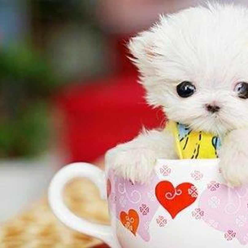 cachorros-pequenos-16