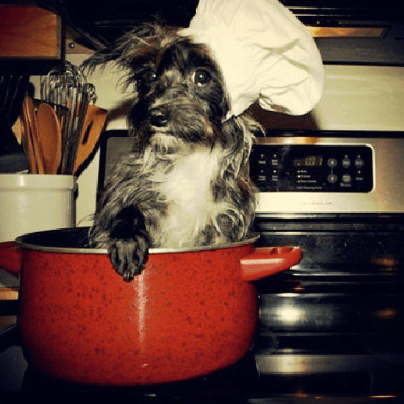 cachorros-pequenos-17