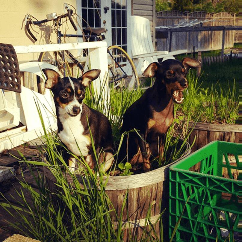 cachorros-pequenos-7