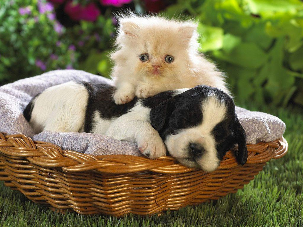 caes-e-gatos-amigos