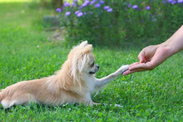comandos-básicos-para-ensinar-a-um-cachorro