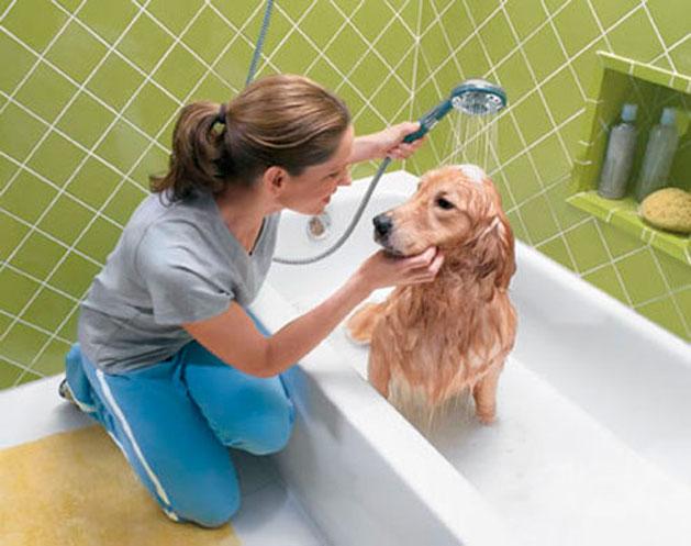 como_dar_banho_no_cachorro