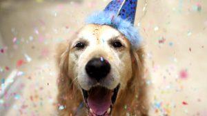 festas-de-aniversario-para-caes