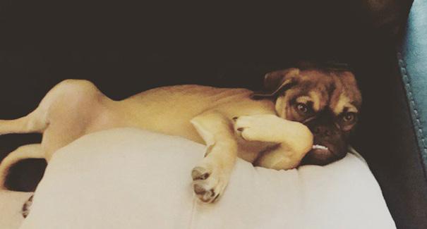 Grumpy Dog foto