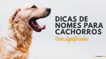 Dicas de nomes de cachorro com significado. Acesse e confira!