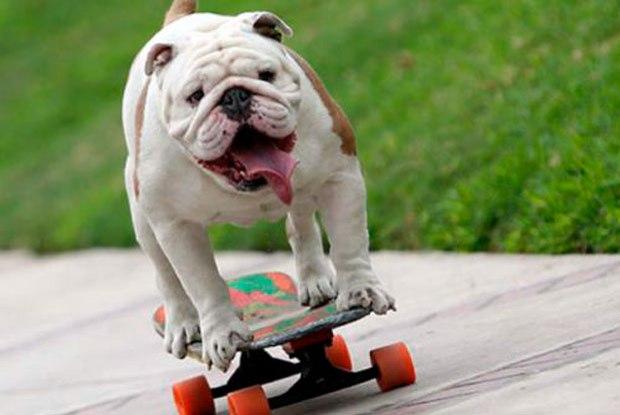 otto-cão-skatista