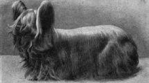 Paisley Terrier cachorros extintos