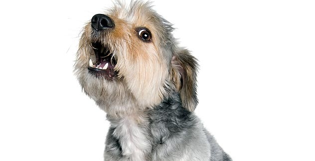 sonhar-com-cachorro-5
