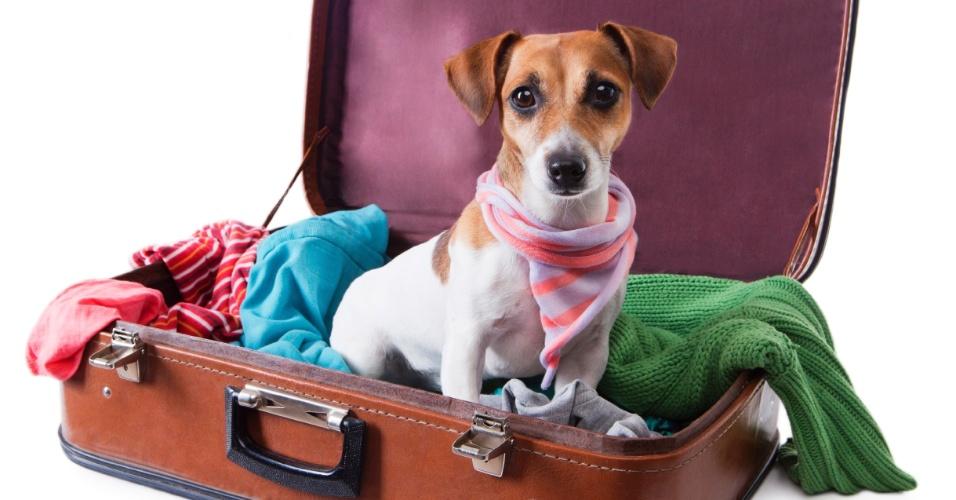 viajar-com-seu-cachorro-para-o-exterior